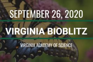 Virginia BioBlitz 2020